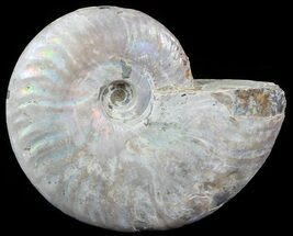 "Buy 3.25"" Silver Iridescent Ammonite - Madagascar - #51493"