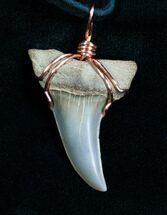 Buy Curved Fossil Mako Tooth Necklace - #4699