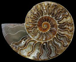 "Buy 4.6"" Polished Ammonite Fossil (Half) - Agatized - #51781"