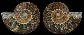 "4.2"" Polished Ammonite Pair - Agatized For Sale, #51743"