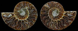 "Buy 4.1"" Polished Ammonite Pair - Agatized - #51736"