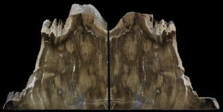 "Buy 6"" Petrified Wood Bookends - Oregon - #52513"