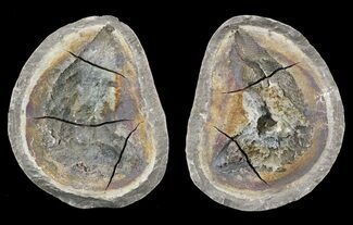 "4.2"" Triassic Fossil Fish In Nodule (Pos/Neg) - Madagascar For Sale, #53663"