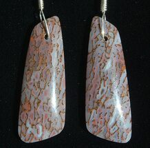 Gorgeous Agatized Dinosaur Bone (Gembone) Earrings  For Sale, #54081