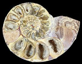 "Buy 2.85"" Sliced, Agatized Ammonite Fossil (Half) - Jurassic - #54043"