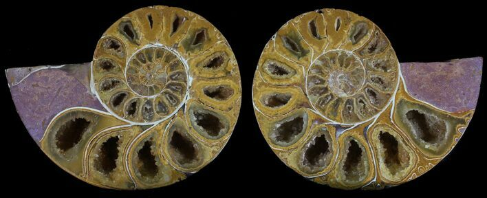 "3.25"" Cut & Polished, Agatized Ammonite Fossil - Jurassic"