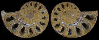 "Buy 2.85"" Cut & Polished, Agatized Ammonite Fossil - Jurassic - #53815"