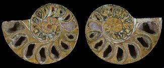 "3"" Cut & Polished, Agatized Ammonite Fossil - Jurassic For Sale, #53825"