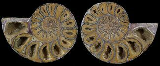 "Buy 2.95"" Cut & Polished, Agatized Ammonite Fossil - Jurassic - #53806"