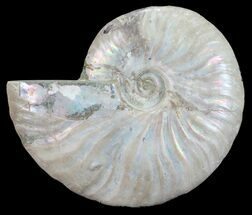"Buy 4.4"" Silver Iridescent Ammonite - Madagascar - #54883"