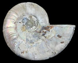 "4"" Silver Iridescent Ammonite - Madagascar For Sale, #54884"
