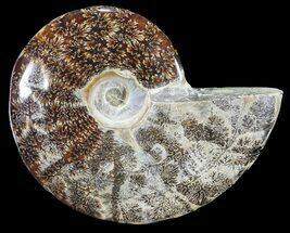 "Buy 5.35"" Polished, Agatized Ammonite (Cleoniceras) - Madagascar - #54535"