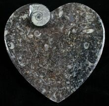 Heart Shaped Fossil Goniatite Dish For Sale, #4949