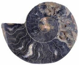 "Buy 2.4"" Split Black/Orange Ammonite (Half) - Unusual Coloration - #55624"