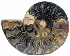 "Buy 5.6"" Split Black/Orange Ammonite (Half) - Unusual Coloration - #55702"