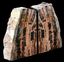 "Buy 7.3"" Tall, Unique, Arizona Petrified Wood Bookends - #56038"