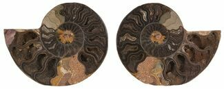 "Buy 3"" Split Black/Orange Ammonite Pair - Unusual Coloration - #55567"