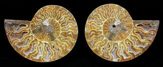 "3"" Polished Ammonite Pair - Agatized For Sale, #56291"
