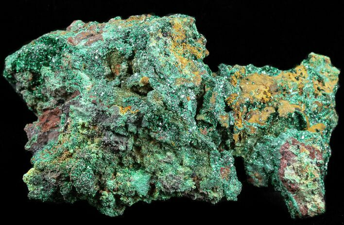 "3.6"" Malachite on Matrix - Morocco"