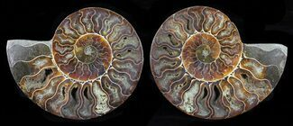 "Buy 5.3"" Cut & Polished Ammonite Pair - Agatized - #58720"