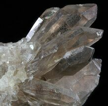 Quartz var. Smoky - Fossils For Sale - #58905