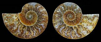 "Buy 2.9"" Polished Ammonite Pair - Agatized - #59437"