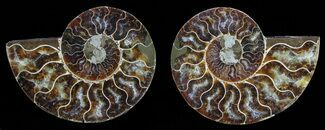 "3.8"" Polished Ammonite Pair - Agatized For Sale, #59453"