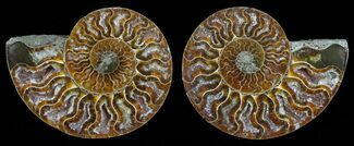"3.5"" Polished Ammonite Pair - Agatized For Sale, #59459"
