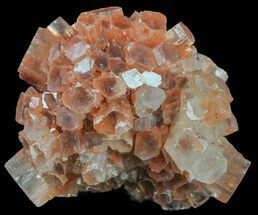 Aragonite - Fossils For Sale - #59787