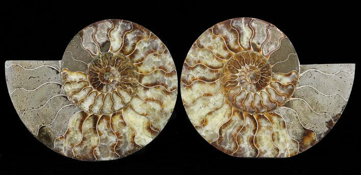 "8.1"" Cut & Polished Ammonite Pair - Agatized"