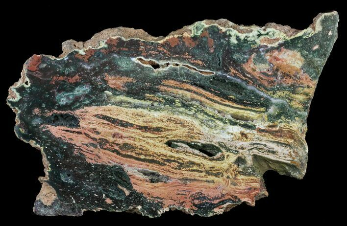 "13.5"" Orbicular Ocean Jasper Slab with Druze - Madagascar"