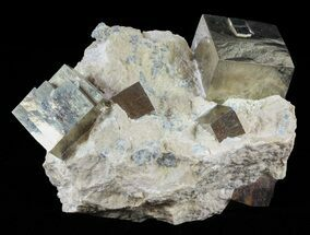 Pyrite - Fossils For Sale - #60771