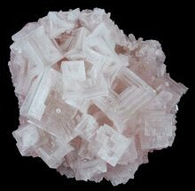 "Buy 2.7"" Pink Halite Crystal Plate - Trona, California - #61066"