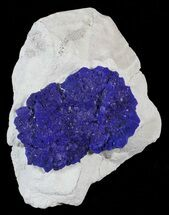 "Buy 1.8"" Brilliant Blue Azurite Sun - Australia - #63253"