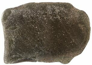 "5.7"" Pyritized, Polished Iguanodon Bone - Isle Of Wight For Sale, #63326"