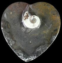 "Buy 4.5"" Heart Shaped Fossil Goniatite Dish - #61261"