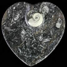 "Buy 4.5"" Heart Shaped Fossil Goniatite Dish - #61264"