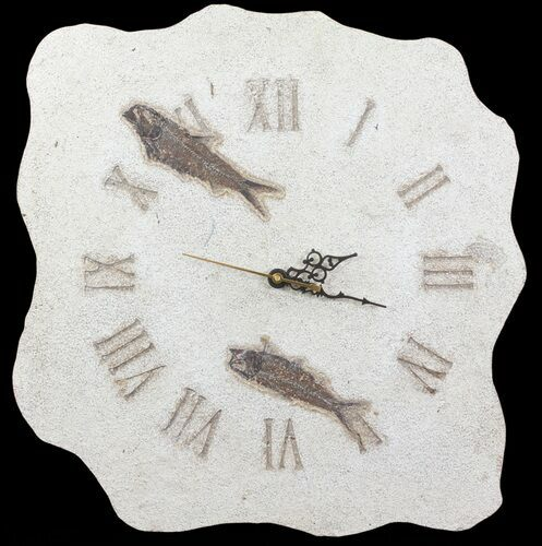 "14.5"" Tall Clock With Two Knightia Fish Fossils - Wyoming"