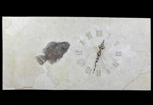 "Buy 23"" Tall Clock With Cockerellites Fish Fossil - Wyoming - #64207"