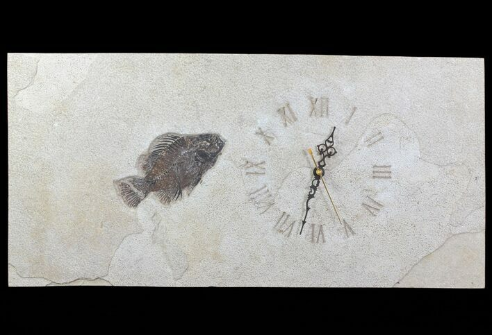 "23"" Tall Clock With Cockerellites Fish Fossil - Wyoming"