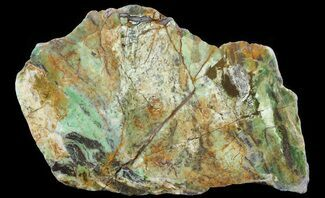 Opalised Serpentine - Fossils For Sale - #64881