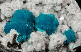 Spectacular Blue Cavansite Clusters on Stilbite - India - #64821-1