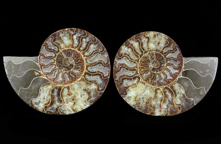 "6.7"" Cut & Polished Ammonite Pair - Agatized"