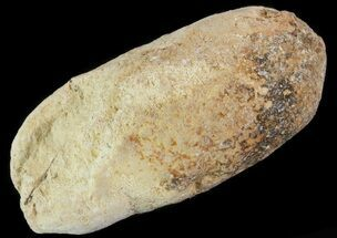 Unknown Fish - Fossils For Sale - #64182