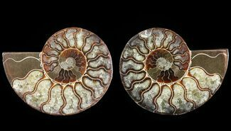 "4.2"" Cut & Polished Ammonite Pair - Agatized For Sale, #64970"
