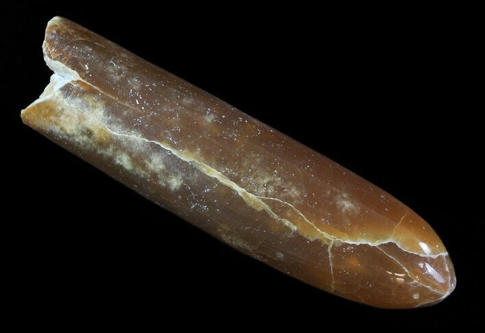 "3"" Agatized Belemnite Fossil - Sweden"