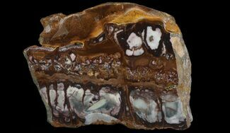 "3.9"" Polished Outback Jasper - Western Australia For Sale, #65648"