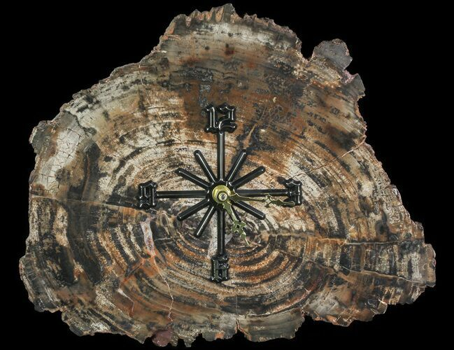 "12"" Wide Arizona Petrified Wood Clock"