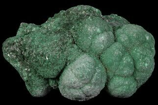 "Buy 1.6"" Botryoidal Malachite Crystal Formation - Congo - #67447"