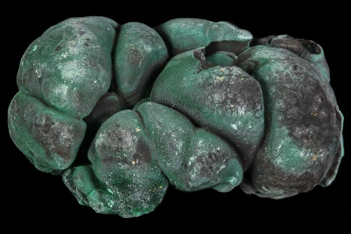 "1.1"" Botryoidal Malachite Crystal Formation - Congo"
